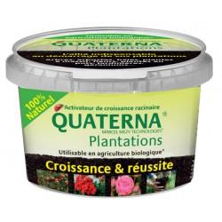 Quaterna Plantation Boite 100 g
